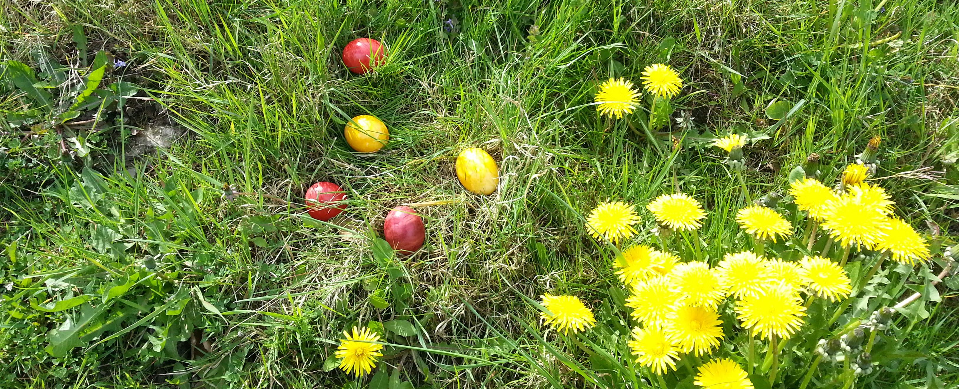 Gelbe und rote Ostereier im Gras. Daneben blüht Löwenzahn.