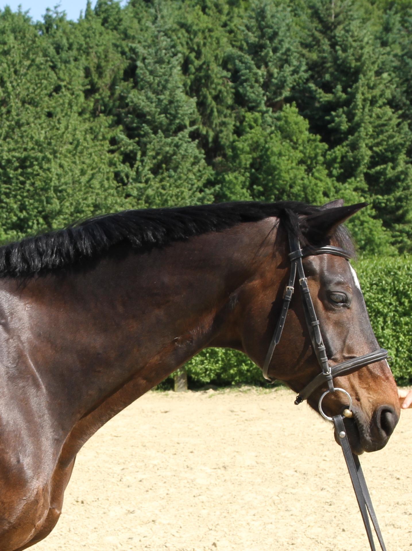 Pferdekopf im Profil, mit Trense. Die Zügel baumeln.