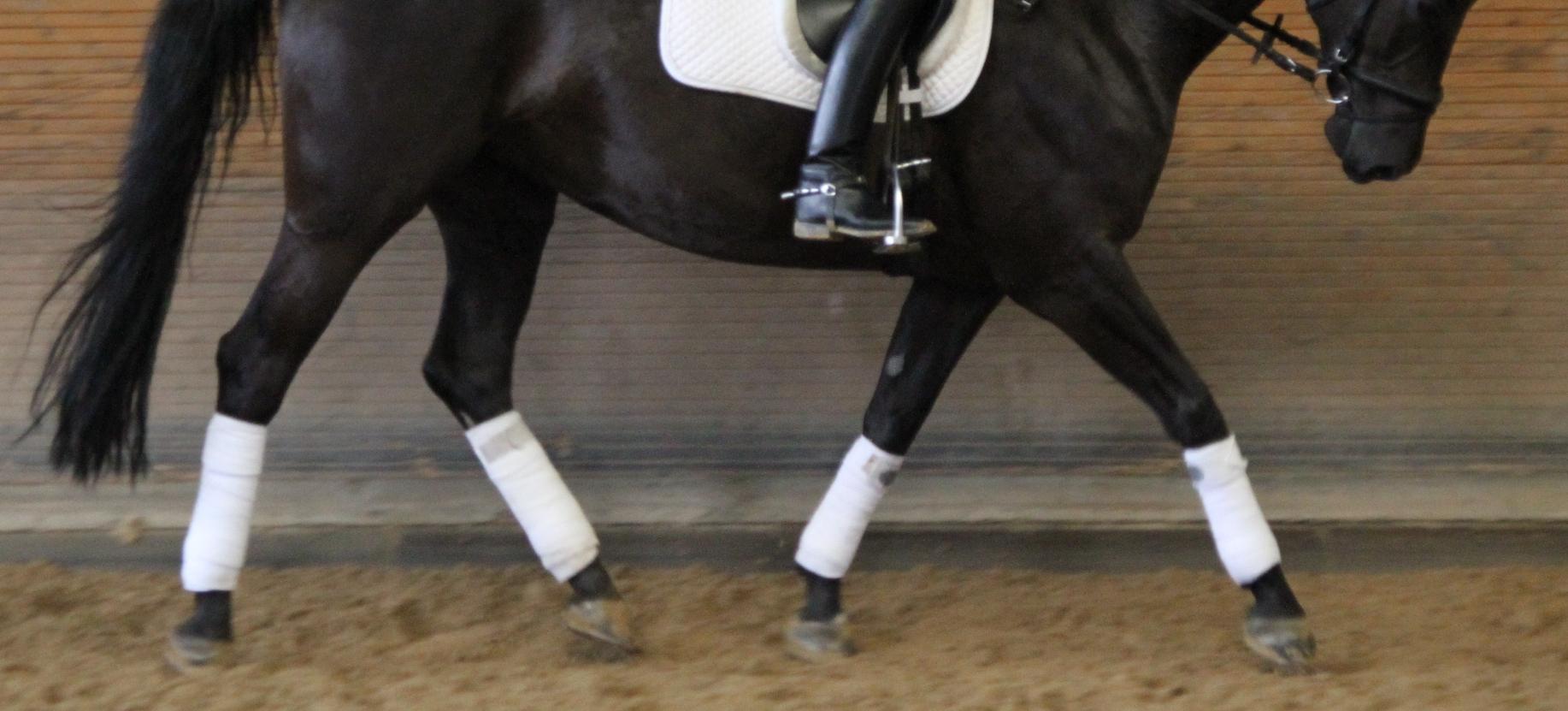 Ein trabendes Pferd