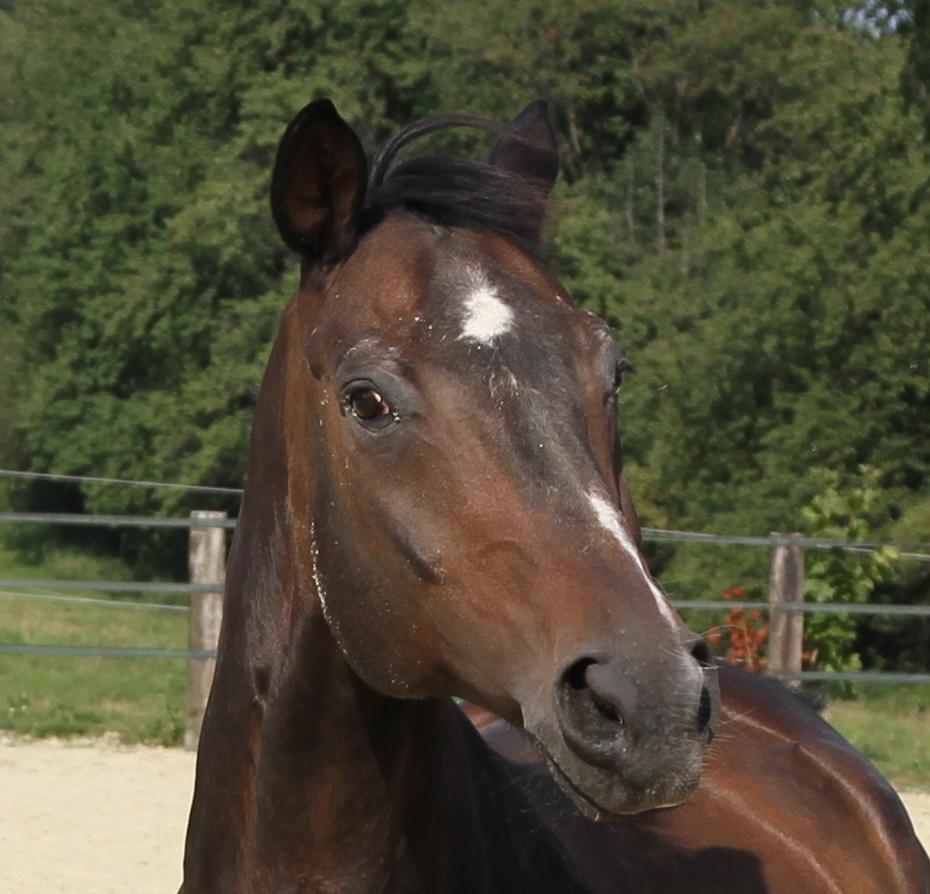 Ein Porträt von Pfridolin Pferd