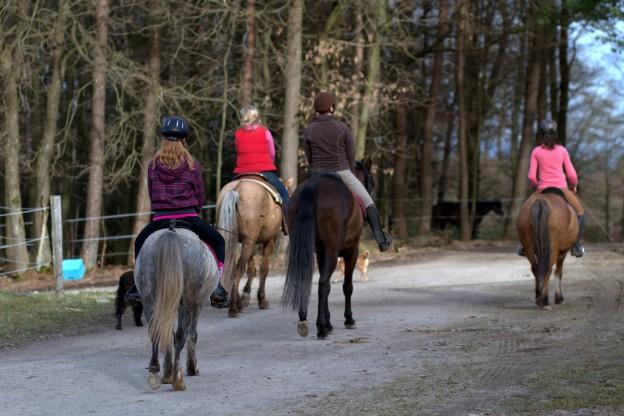 Eine Gruppe Reiter bei einem Ausritt