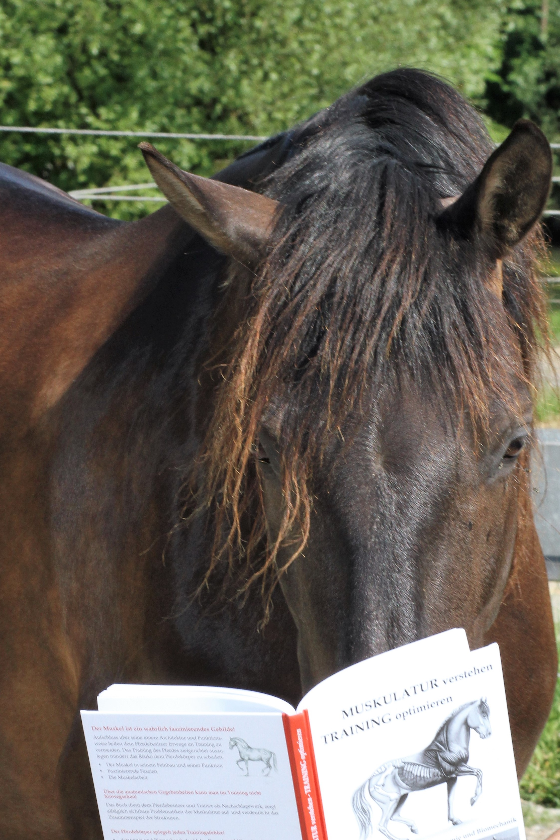 Der Lutschi tut so, als könnte er lesen