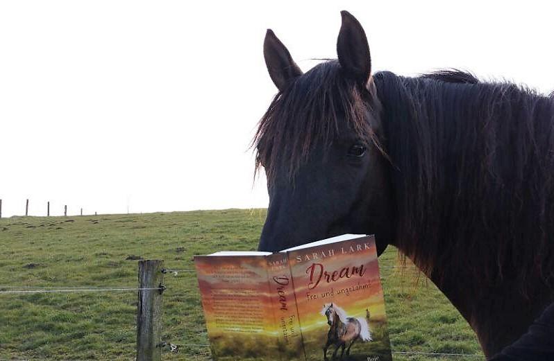 Der Lutschi liest ein Buch