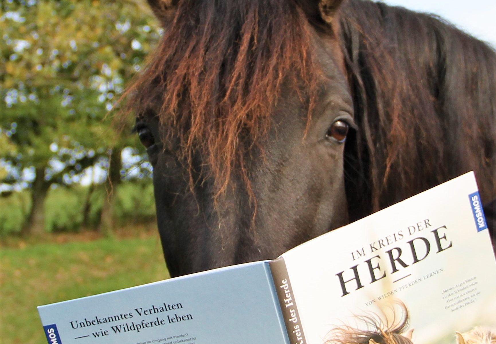 """Das spanische Mähnenwunder liest ein Buch, nämlich """"Im Kreis der Herde""""."""