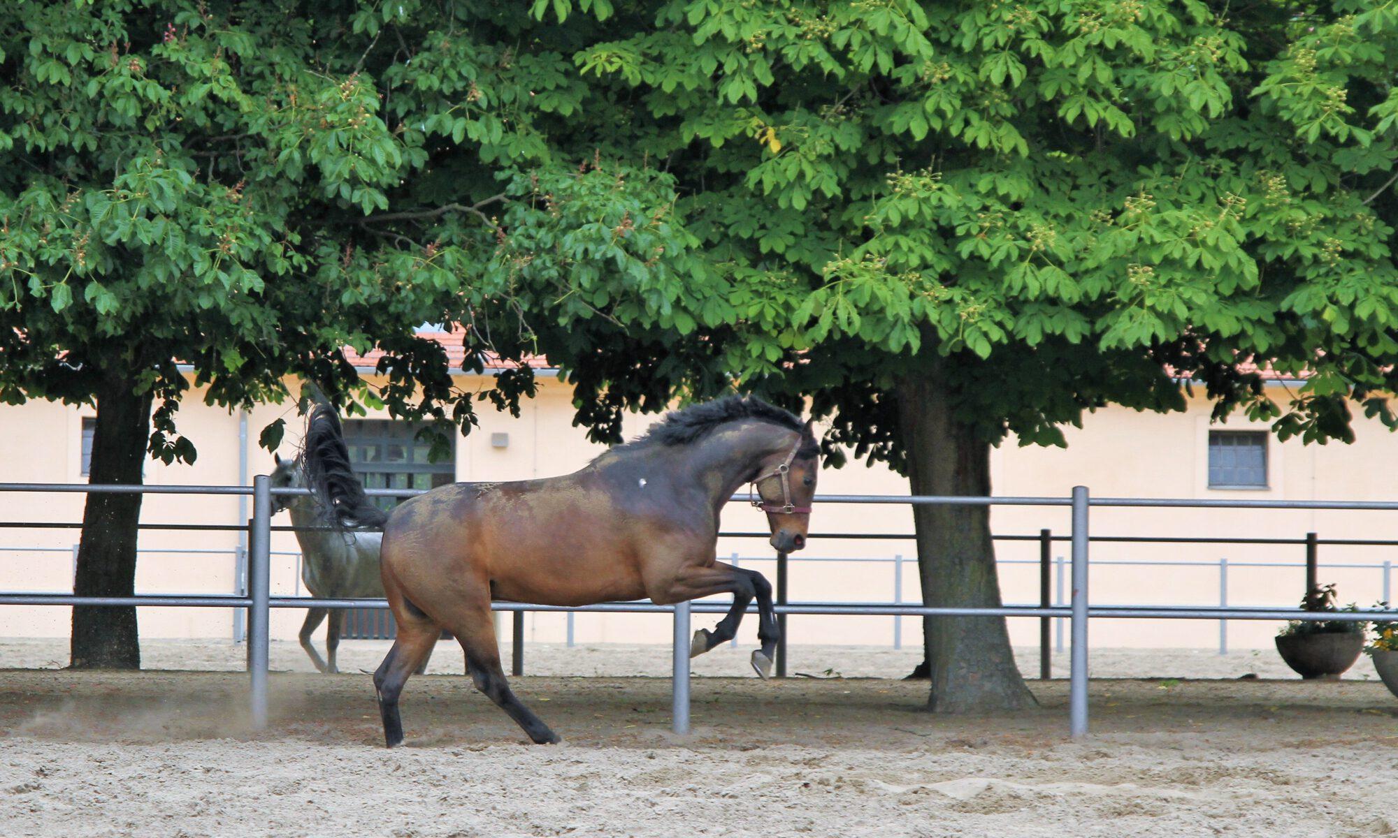 Ein braunes Pferd vor herrschaftlicher Kulisse