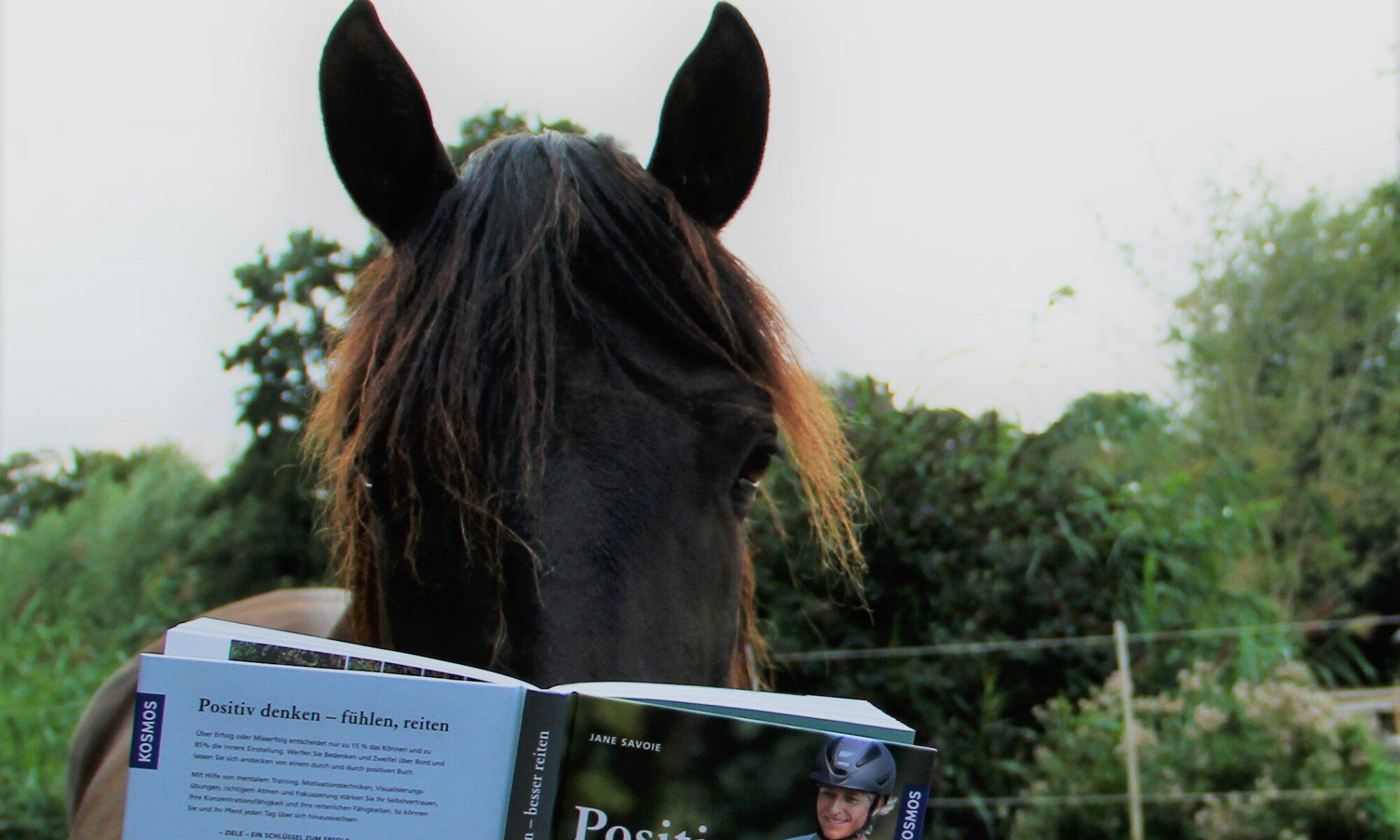 """Das spanische Mähnenwunder liest """"Positiv denken - besser reiten"""""""