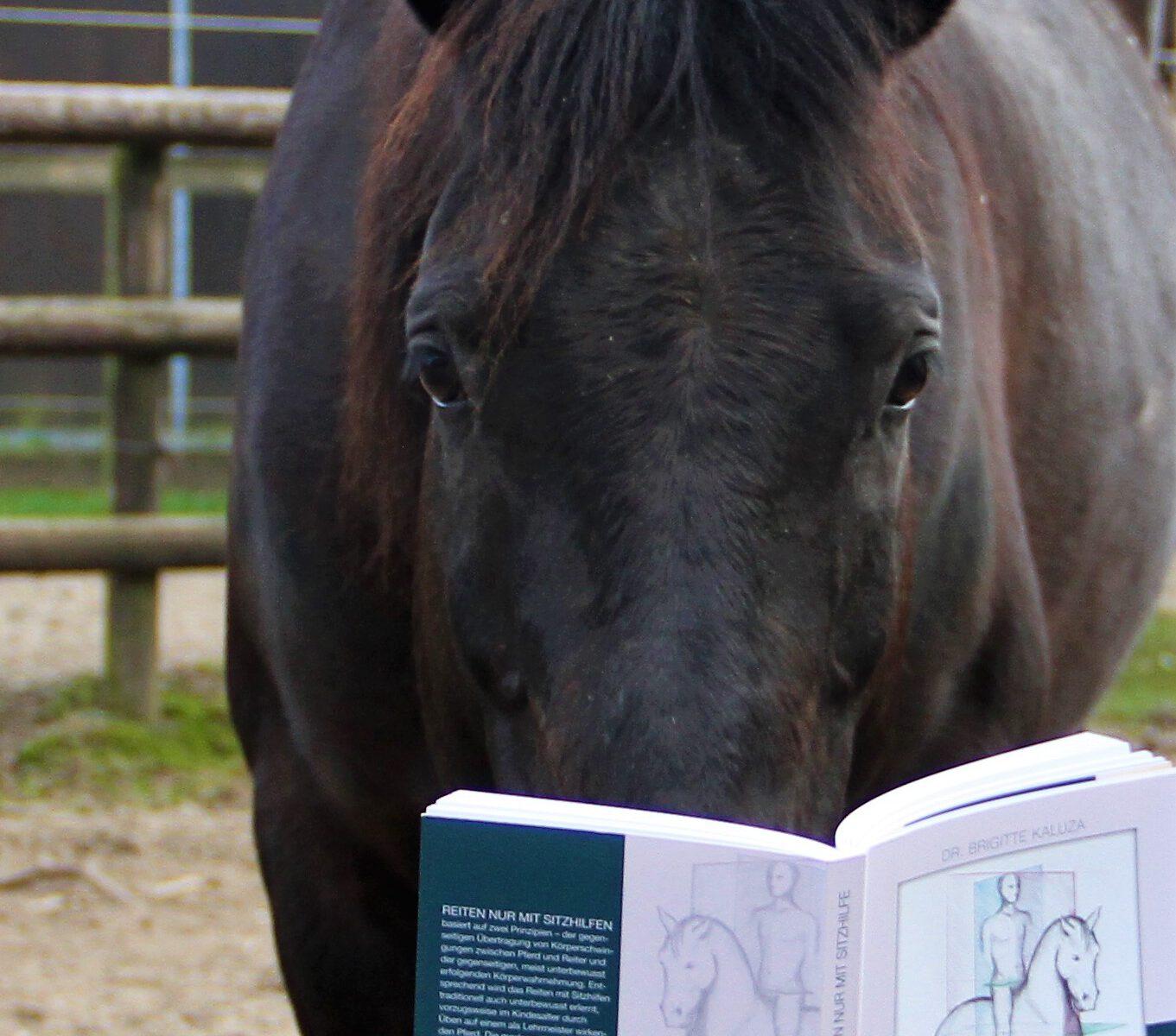 """Ein Pferd liest ein Buch mit dem Titel """"Reiten nur mit Sitzhilfe"""""""