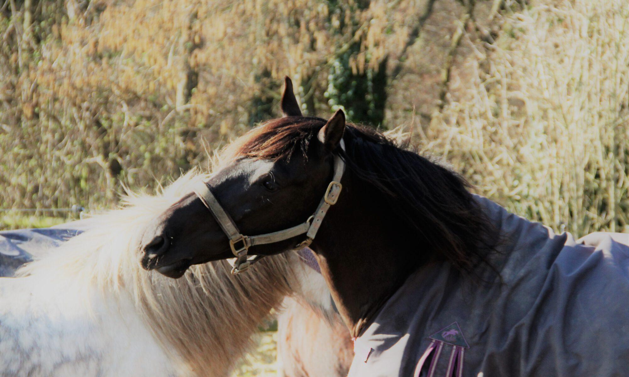 Zwei Pferde spielen miteinander