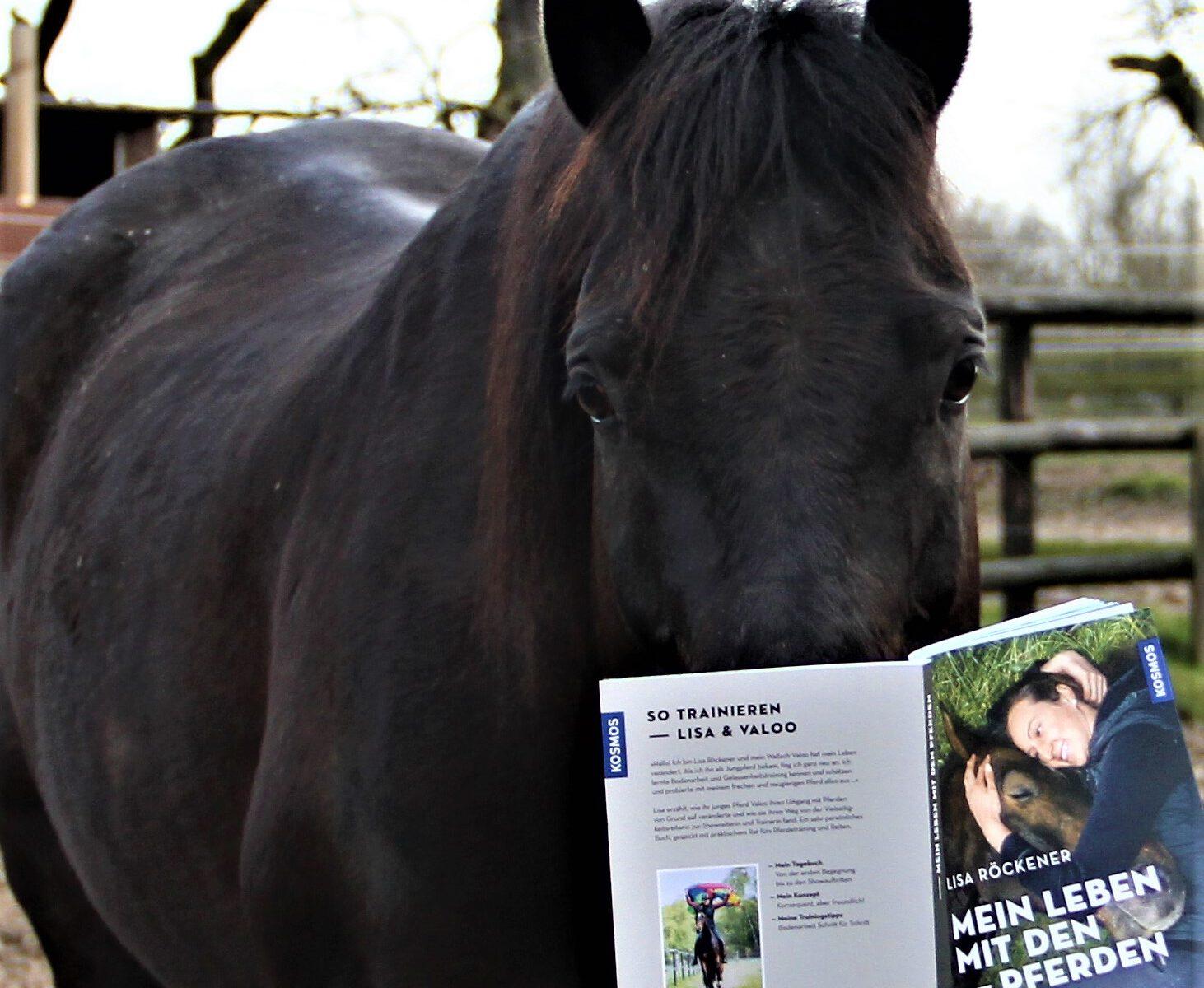 Für euch getestet: Mein Leben mit den Pferden