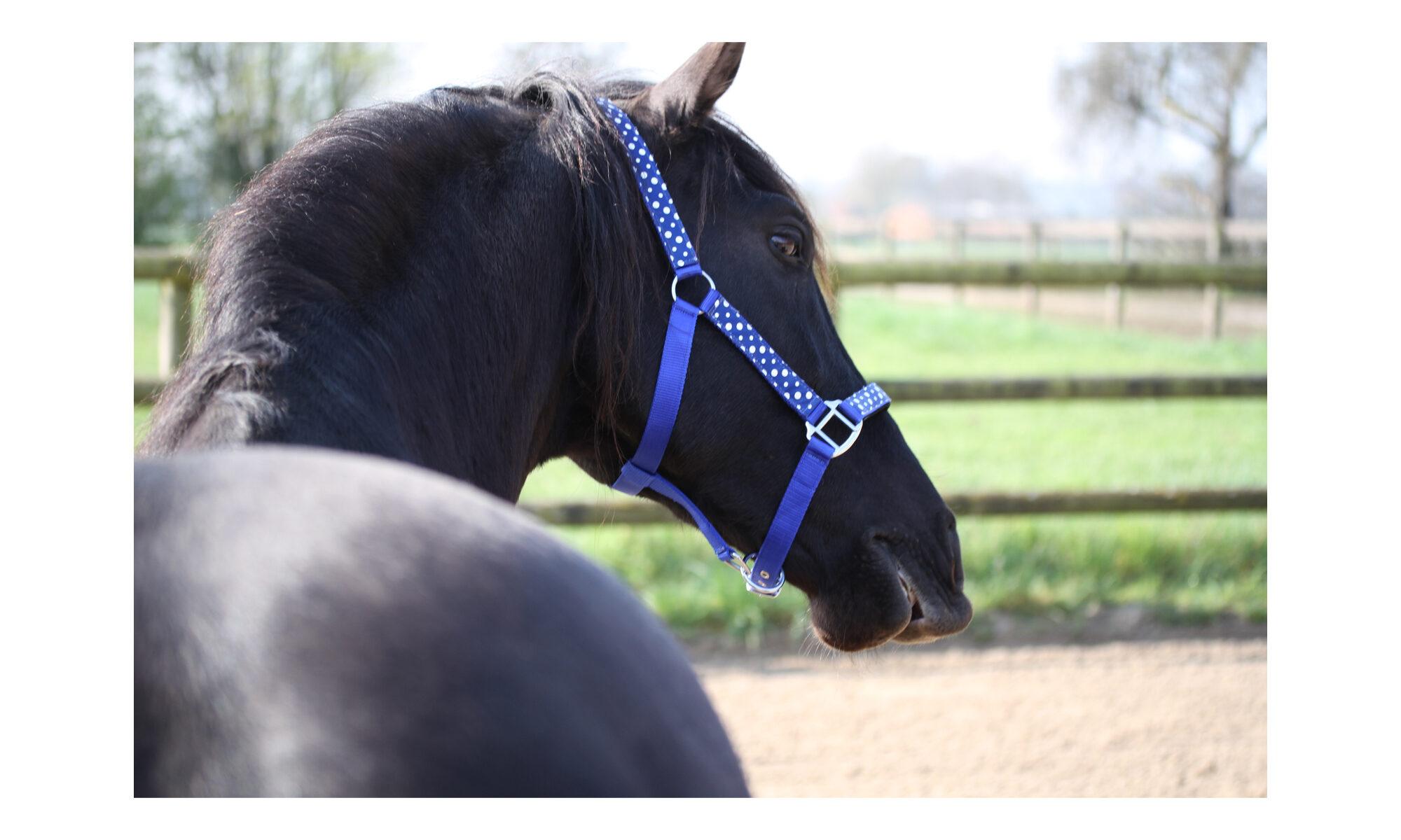 Pfridolin Pferd